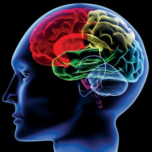 脳を知ること