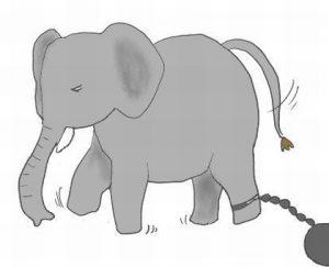 鎖につながれた小象の話